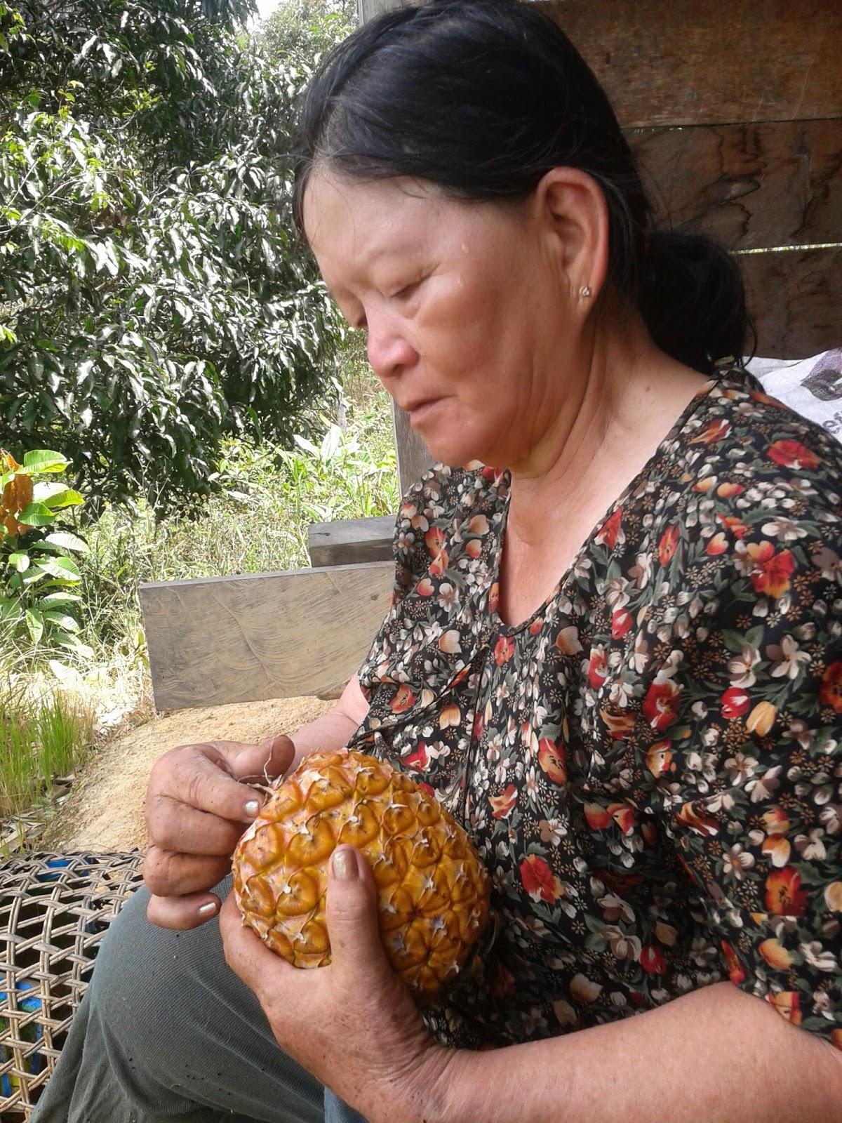 The Bario Pineapple